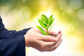 Growth Plant in Hands